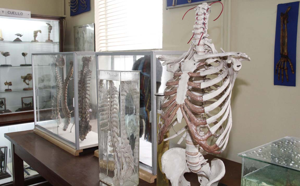 Museo de Anatomía UdeC, Patrimonio científico de Chile | PanoramaWeb ...